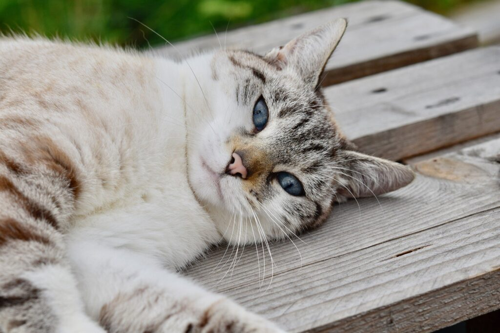 pet insurance cost, pet insurance for cats, insurance for cats